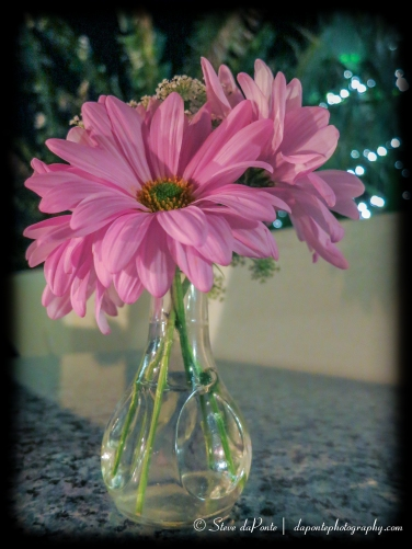 flowersatdarbster