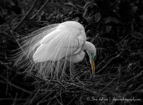 Tending_the_nest