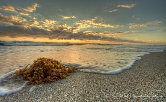 seaweed_sunriseimg4362