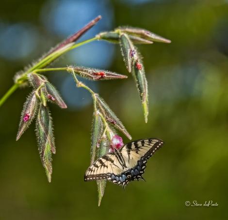 ButterflyAligatorFlag