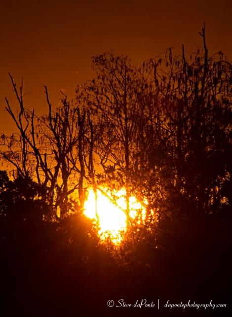 steve_daponte_sunset_glow_img3836