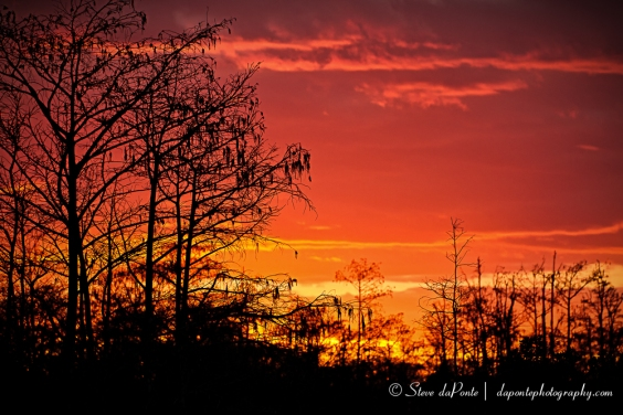 steve_daponte_sunset_swamps_edge_img3341