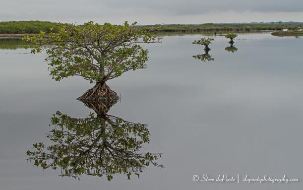 steve_daponte_merritt_island_landscape_img4978