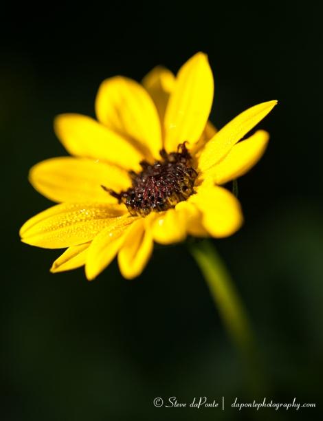 steve_daponte_yellow_img7365