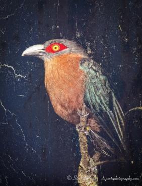steve_daponte_zoo_bird_img3341