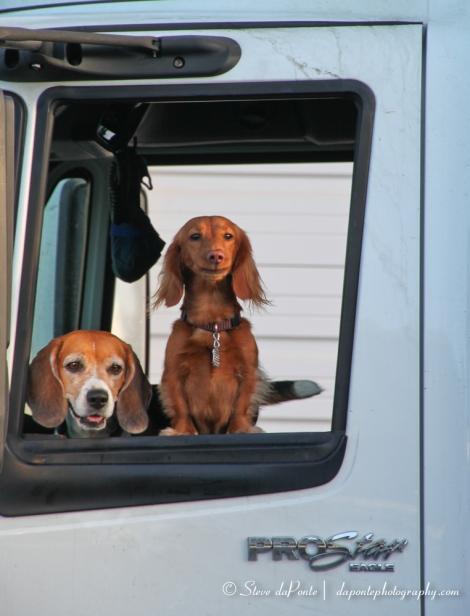 stevedaponte_truckers_buddies_img1593