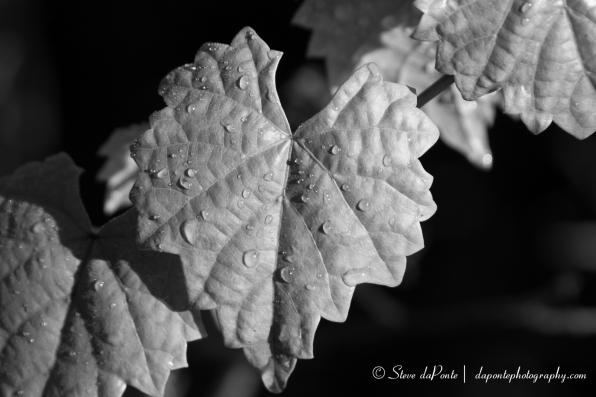 steve_daponte_after_the_rain