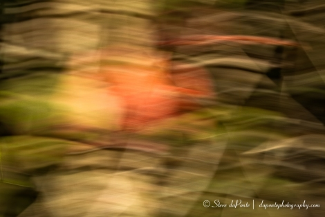steve_daponte_abstract_redgreen_img0863
