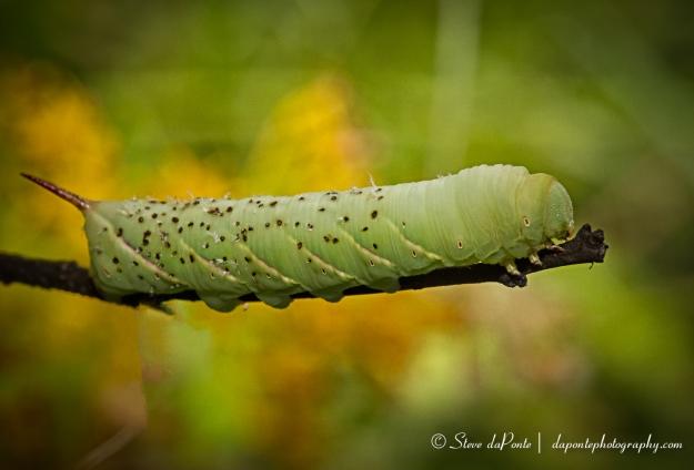 steve_daponte_caterpillar