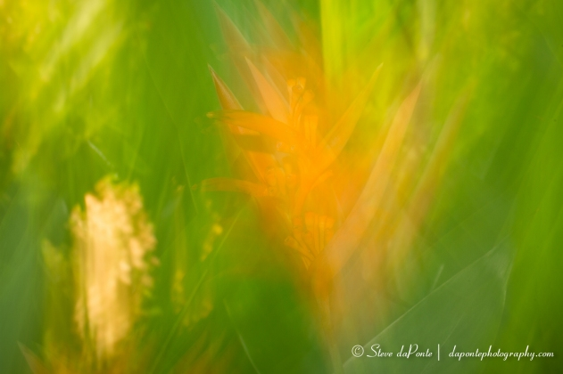 stevedaponte_abstract9_img1644