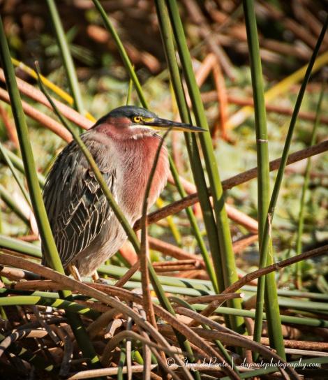 stevedaponte_bird_img3180