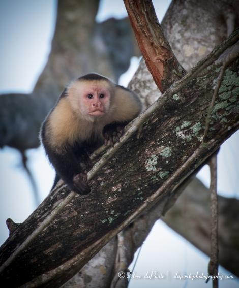 steve_daponte_monkey_img5699