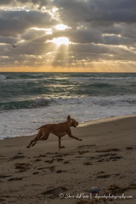 steve_daponte_running_dog_img7316