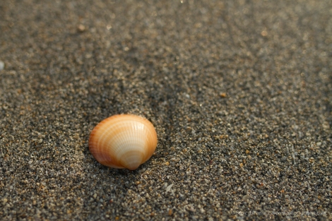 steve_daponte_shell_on_the_beach_img8976
