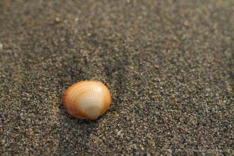 steve_daponte_shell_on_the_beach_img8976