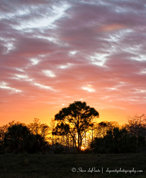 stevedaponte_sunset_cypresstrees5_img3857