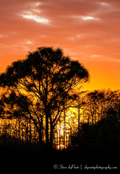 stevedaponte_sunset_cypresstrees6_img3863