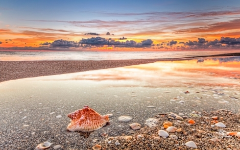 stevedaponte_conch_shell_at_sunrise_img3007