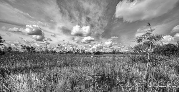 stevedaponte_swamp_img2634