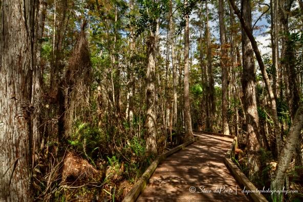 stevedaponte_cypressswampboardwalk_img2669