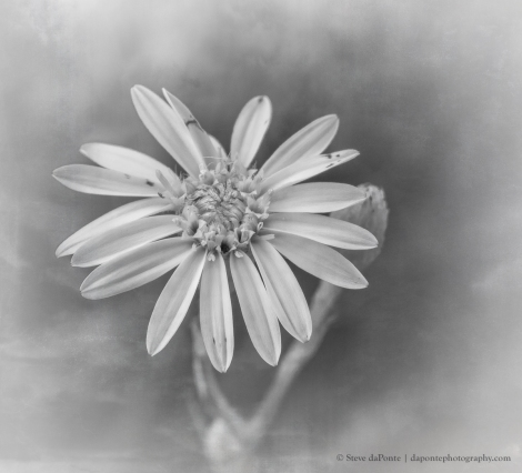 flower_monochrome_imgPB070041