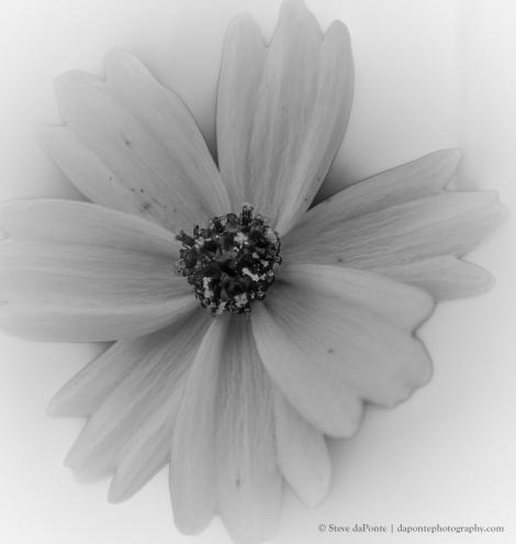 steve_daponte_flower_pb070117