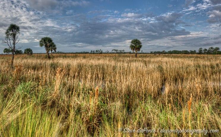 steve_daponte_swamp_prairie_dsc01617