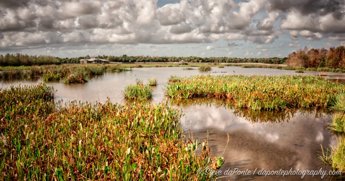 steve_daponte_green_cay_wetlands_dsc03681