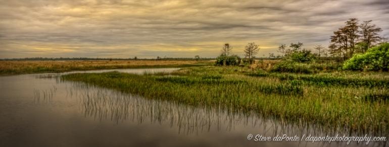 steve_daponte_swampy_dsc01347