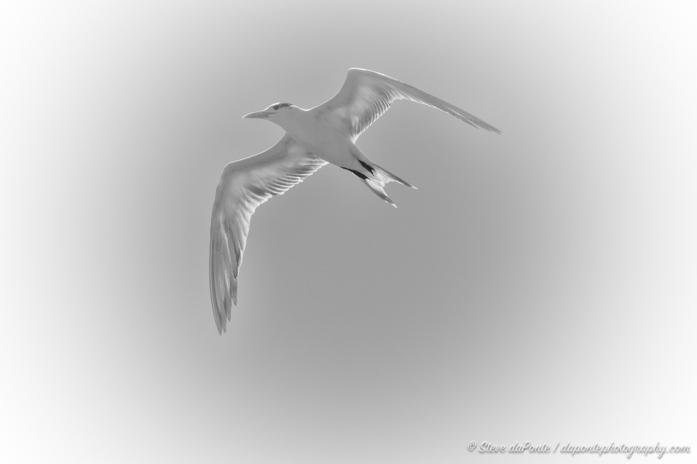 steve_daponte_sea_bird_DSC05051