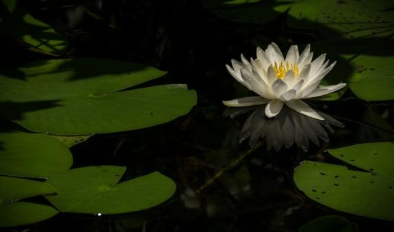 stevedaponte_waterflower_DSC00451