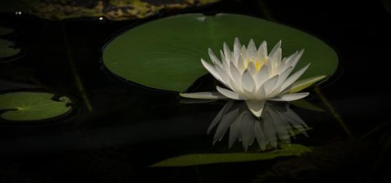 stevedaponte_waterflower_DSC00459