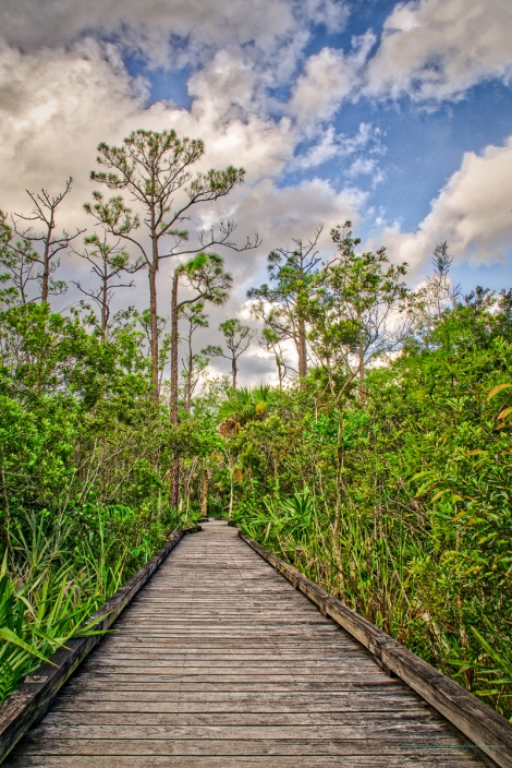 steve_daponte_boardwalk_dsc03446
